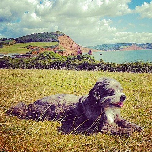 Dog-enjoying-Ladram-Bay-Devon